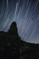 京都府 ゲンジボタルの光跡