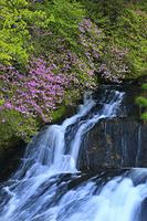 栃木県 トウゴクミツバツツジ咲く新緑の竜頭ノ滝