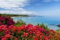 ハワイ ブーゲンビリア