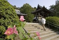 愛媛県 四国霊場第50番 繁多寺 フヨウの花とお遍路さん