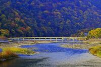京都府 京都市 秋の渡月橋 朝景