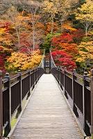 栃木県 塩原 紅のつり橋