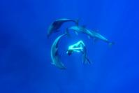 ミナミハンドウイルカとドルフィンスイムする女性