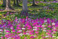 岐阜県 花の森四十八滝山野草花園