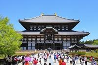 奈良県 東大寺 新緑の大仏殿と観光客