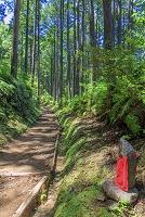 和歌山県 木漏れ日の道休禅門と熊野古道