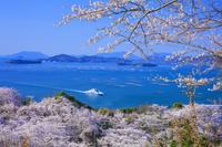 広島県 桜咲く正福寺公園より瀬戸内海と島々