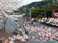 春の東海道 蹴上付近 洛東 京都
