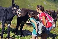 ロバに餌をあげる女の子
