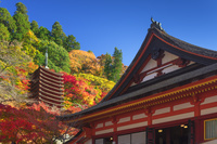 奈良県 秋の談山神社