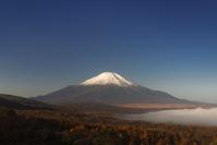 山梨県 カラマツの黄葉と富士山