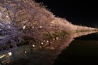 青森県 弘前公園西濠 桜並木の夜景