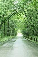 新緑の街道