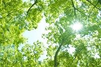 新緑に射す陽光