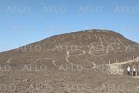 ナスカの地上絵で新発見 丘の斜面に巨大ネコ