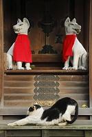 愛知県 一宮市 猫とお稲荷様