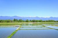 長野県 残雪の北アルプスと水田