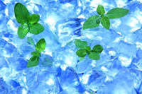 砕いた氷とグリーンハーブ