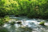 青森県 十和田市 奥入瀬渓流 三乱の流れ 新緑