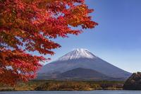 山梨県 精進湖からの紅葉と富士山