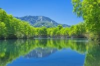 長野県 新緑の鎌池