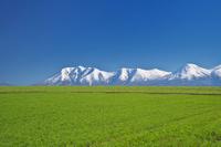 北海道 十勝岳連峰の秋