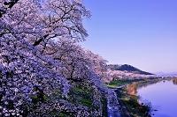宮城県 朝焼けに染まる白石川堤 一目千本桜