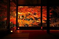 京都府 ライトアップの紅葉の宝泉院