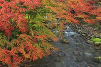 静岡県 修善寺温泉