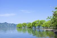 滋賀県 長浜市 西野水道