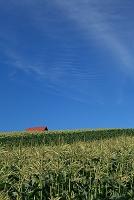 北海道 赤い屋根の見える丘