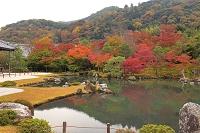京都府 紅葉の天龍寺