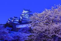 兵庫県 姫路市 姫路城 夜景