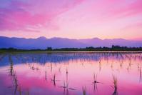 長野県 安曇野市 豊科光の水田と常念岳と有明山など北アルプス...
