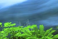 青森県 奥入瀬渓流 若草と流れ