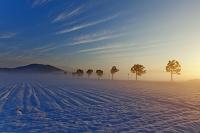 滋賀県 朝日に染まる朝霧漂う雪田と稲架木