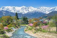 長野県 大出公園 北アルプス連峰 白馬三山