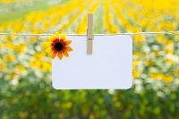 ポストカードとひまわり畑