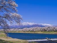 宮城県 一目千本桜と蔵王連峰