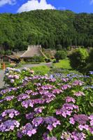 京都府 紫陽花咲くかやぶきの里