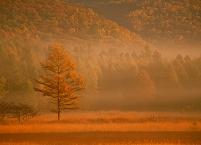 日本の四季 秋