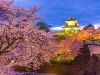 石川県 桜 金沢城