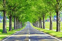 滋賀県 高島市 メタセコイア並木