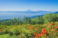 山梨県 甘利山よりレンゲツツジと富士山