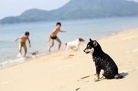 砂浜の子犬