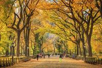 アメリカ合衆国 ニューヨーク市 秋のセントラルパーク