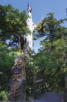 鹿児島県 森林の中の紀元杉
