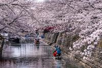 岐阜県 桜咲く水門川と舟下り