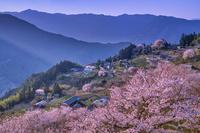 高知県 桜の集落