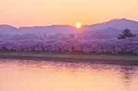 岩手県 北上展勝地の日の出と桜